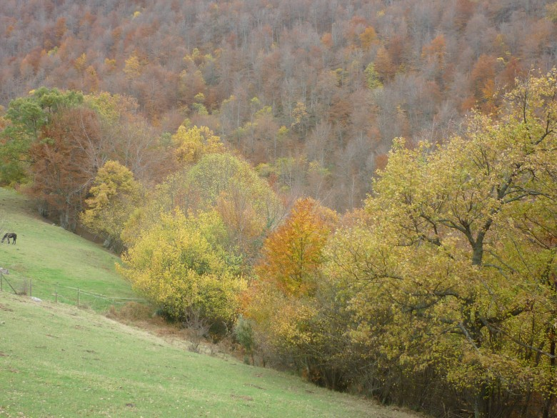 otoño en Picos de Europa