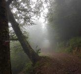 Hayedos por las laderas de Peña Sagra